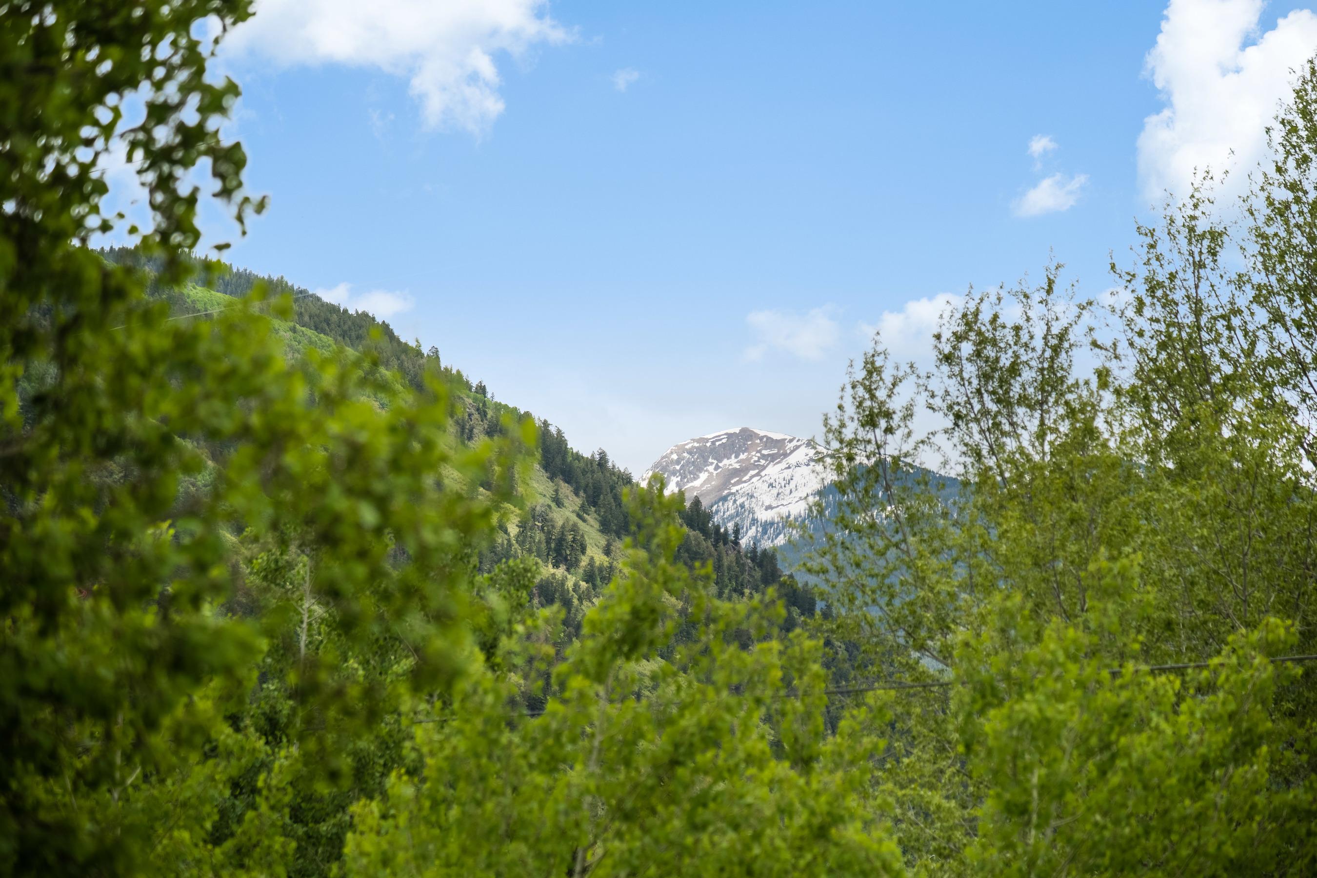Aspen's Seasonal Shuffle